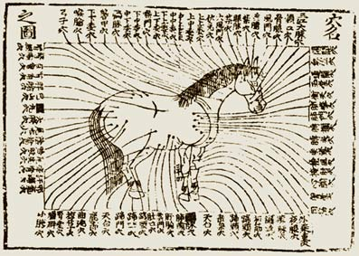 Acupuncture for horses